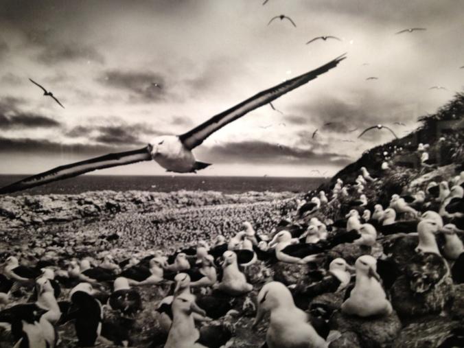 Genesis-Salgado-en-Antarctique
